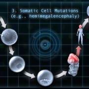 Somatic Cell Mutations 3 copy